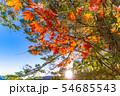 秋の白駒の池 朝焼け 【長野県】 54685543