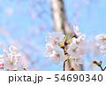 春の風景 満開の桜 54690340
