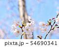 春の風景 満開の桜 54690341