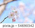 春の風景 満開の桜 54690342