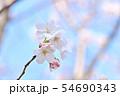 春の風景 満開の桜 54690343