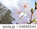 春の風景 満開の桜 54690344