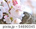 春の風景 満開の桜 54690345