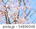春の風景 満開の桜 54690346