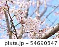 春の風景 満開の桜 54690347