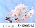 春の風景 満開の桜 54690348