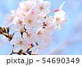 春の風景 満開の桜 54690349