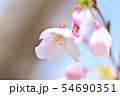 春の風景 満開の桜 54690351