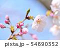 春の風景 満開の桜 54690352