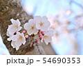 春の風景 満開の桜 54690353