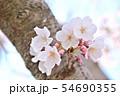 春の風景 満開の桜 54690355