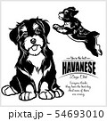 Havanese - vector illustration for t-shirt, logo and template badges 54693010