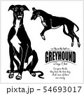 Greyhound - vector illustration for t-shirt, logo and template badges 54693017