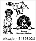 German Shorthaired Pointer - vector illustration for t-shirt, logo and template badges 54693028