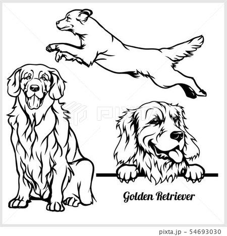 Golden Retriever - vector illustration for t-shirt, logo and template badges 54693030