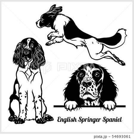 English Springer Spaniel - vector illustration for t-shirt, logo and template badges 54693061