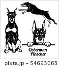 Doberman Pinscher - vector illustration for t-shirt, logo and template badges 54693063