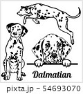 Dalmatian - vector illustration for t-shirt, logo and template badges 54693070
