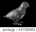 3d Illustration of parrot polygon style 54706983