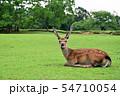 奈良公園の鹿 54710054
