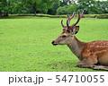 奈良公園の鹿 54710055