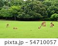 奈良公園の鹿 54710057