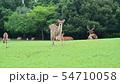 奈良公園の鹿 54710058