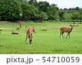 奈良公園の鹿 54710059