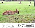 奈良公園の子鹿 54710063