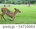奈良公園の子鹿 54710064