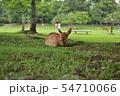 奈良公園の鹿 54710066