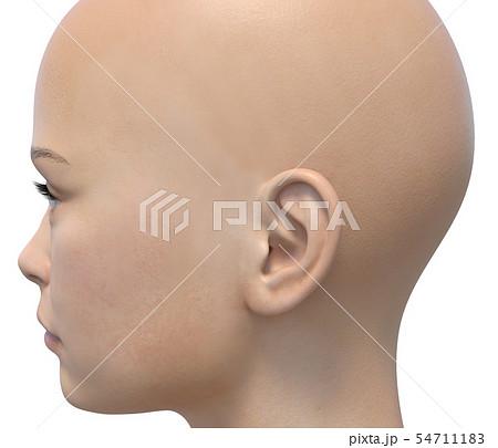 女性 ボディーパーツシリーズ 横顔 perming3DCGイラスト素材 54711183