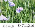 ハナショウブの花 54711210