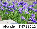 ハナショウブの花 54711212