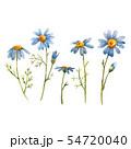 Blue chamomile daisy vector flower 54720040