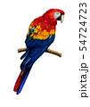 コンゴウインコのイラスト/Scarlet Macaw Illustration 54724723