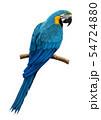 ルリコンゴウインコのイラスト/Blue and Yellow Macaw Illustration 54724880