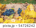 composition of grapes and fallen leaves on burlap 54726242