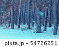 Winter snowy pine fores at snowfall 54726251