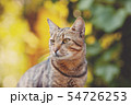 Portrait of a cute cat outdoors 54726253