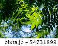 自然イメージ 54731899