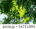 自然イメージ 54731900