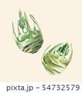Watercolor kohlrabi vector vegetable 54732579