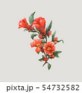 Watercolor pomegranate vector flowers 54732582