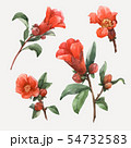 Watercolor pomegranate vector flowers 54732583