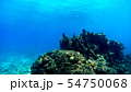 沖縄 渡嘉敷島の渡嘉志久ビーチ 水中撮影 54750068