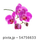 Pink orchid on a white background 54756633
