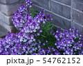 姫金魚草 リナリア 花言葉は「この恋に気づいて」 54762152