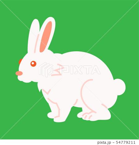 ウサギ 54779211