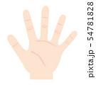 手 手のひら イラスト 54781828